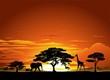 Fototapeten,afrika,savanne,landschaft,postkarte