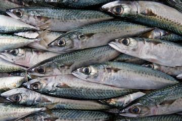 fresh fish background