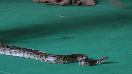 Snake, people