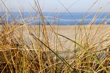 Blick auf die Ostsee und den Strand