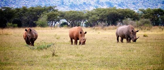 Rhino Trio