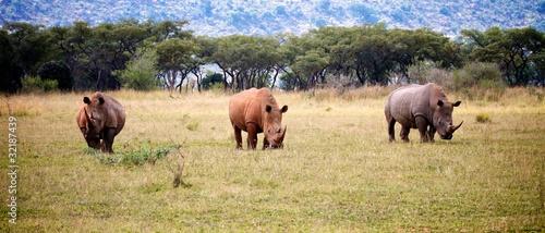 Foto op Canvas Neushoorn Rhino Trio