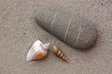 stein und muschel