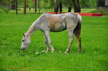 a horse on grass (meadow)