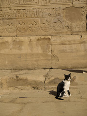 Temple cat at Edfu in Egypt , dedicated to God Horus