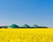 Biogasanlage im Rapsfeld 3