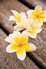Fleurs de frangipanier, fond bois