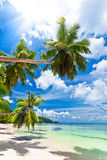 Fototapety seychelles plage cocotier
