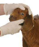 farm veterinary care poster