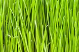 grünes Gras Hintergrund