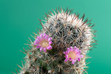 cactus with flowers, close-up