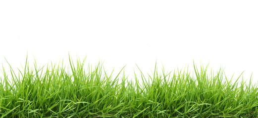 fresh green grass © anankkml