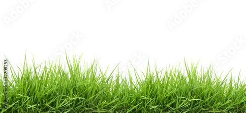 fresh green grass - 32209253