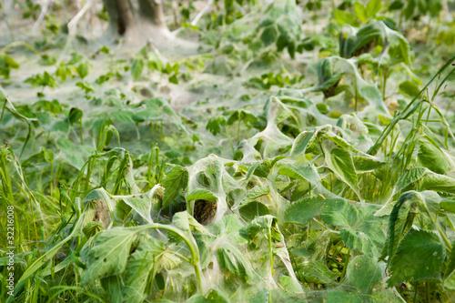Massiver Raupenbefall überzieht auch die Pflanzen auf dem Boden