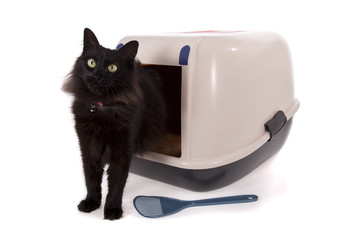 Cat using a closed litter box isolated on white background.