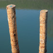 Wooden poles on water surface