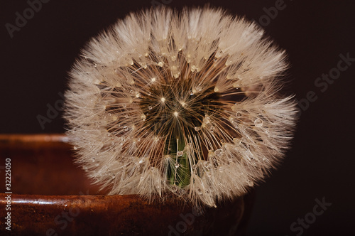 Dandelion flower in a clay vase