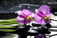 Spa oriental avec l'orchidée avec et plante verte sur les pierres zen