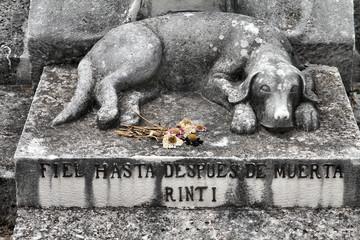 Dog grave in Havana, Cuba