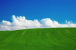 Summer field with green grass and blue sky