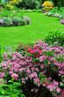 Azaleenstrauch im Garten