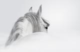 Fototapeta szary - głowa - Zwierzę Hodowlane