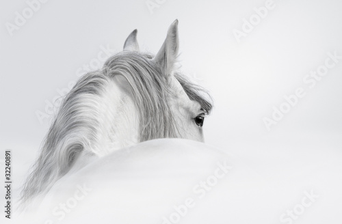 Andalusian horse in a mist - 32240891