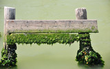 wooden fence with algae in water poster