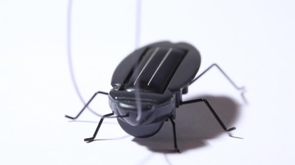 toy black beetle with solar battery vibrating on white