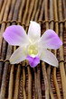 Beautiful orchid on bamboo stick straw mat