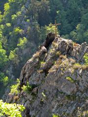 Gipfelkreuz Rosstrappe im Harz