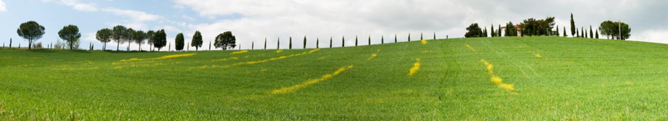 Panoramica collina con fiori gialli a Grosseto in Toscana