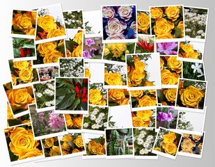 Collage di fotografie di fiori