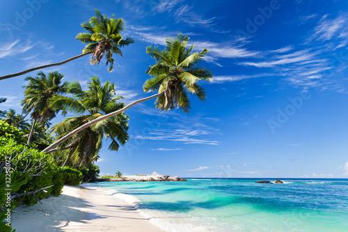 seszele-plazy-kokosowe-drzewo
