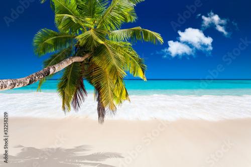 palma-kokosowa-na-bialej-plazy