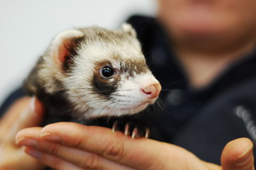 Woman holding ferret