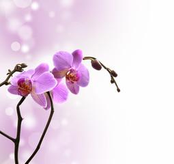 Orchidea su sfondo lilla e bianco