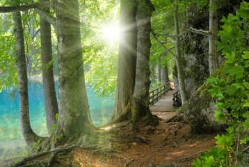 Sonnenschein im Wald neben klarem See