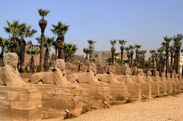 Avenue of Sphinxes in Luxor in Egypt