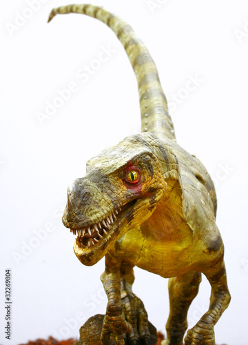 Ornitholestes dinosaur on white