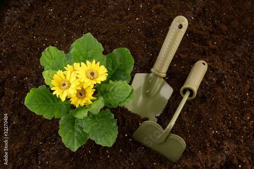 Flowers growing in the soil, hoe and spade
