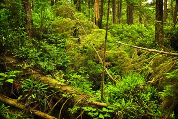 Lush temperate rainforest