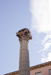 A stork nest on the Column of the Memorial for the VII Legion