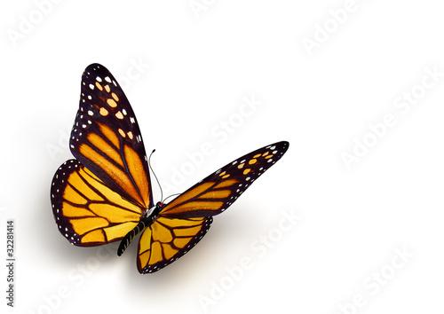 butterfly - 32281414