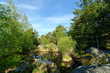 forêt de fontainebleau, mare aux biches - 32282033
