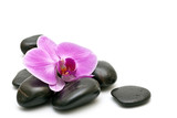 Fototapety Pink orchid and zen Stones on a white background
