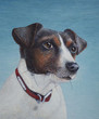 Egg tempera painting of a Jack Russell terrier