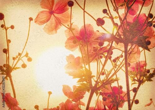 Fototapeten,anemone,japanese,japan,herbst