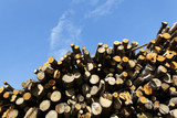 big woodpile and blue sky in spring poster