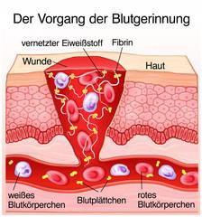 Blutgerinnung Haut Wundheilung